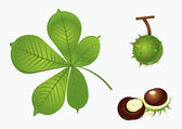 Chestnut set — Stock Vector