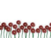 Vackra blommor i en rad isolerade — Stockfoto