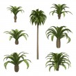 Canary date palms — Stock Photo