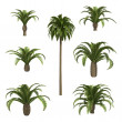 Canary date palms - Stock Photo