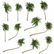 Stock Photo: Coconut palms