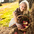 Beautiful blonde smiling woman with many apple in basket on hays — Stockfoto
