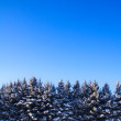Winter landscape spruce snow and blue sky - Stock Photo