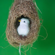 Stock Photo: White bird in nest