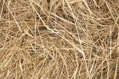 The Hay — Stock Photo
