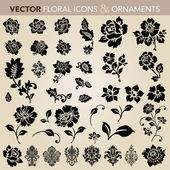 Set d'ornement floral vector — Vecteur