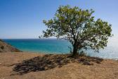 Tree and shadow — Stock Photo