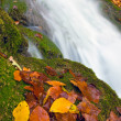 Autumn leafs near waterfall — Stock Photo