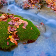 Autumn leafs on green moss - Stock Photo
