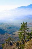 Pine in mountain — Stockfoto