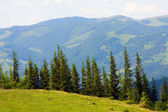 In mountains — Stock Photo