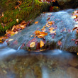 Autumn leafage in water of mountain stream — Stock Photo