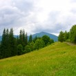 Green pasture in mountains — Stock Photo #4317921