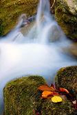 Autumn leafs near water stream — Stock Photo