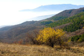 Yellow autumn tree in mountains — Stock Photo