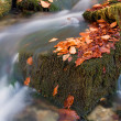 Autumn brook — Stock Photo #4491937