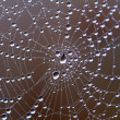 Web with water drops — Stock Photo #4491940