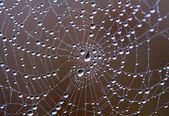 Web with water drops — Stock Photo