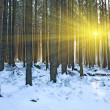 Winter scene in forest — Stock Photo