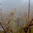 Web with water drops — Stock Photo #4793517