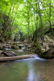 Mountain river in green forest — Stock Photo