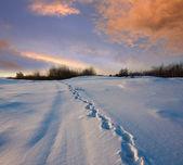 Snowpath en estepa — Foto de Stock