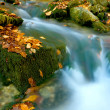 Foto Stock: Stream among green stones with autumn leafage