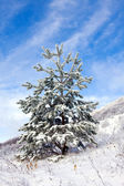 Witner tree — Stockfoto