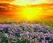 Zachód słońca w stepie — Zdjęcie stockowe