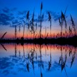 colorful sunset over a wetland — Stock Photo