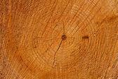 Recién cortado el tronco de árbol — Foto de Stock