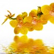 Stock Photo: Orchid petals reflecting in water