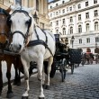 Horse-driven carriage at Hofburg palace, Vienna - Stock Photo