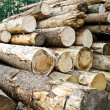 Stack of chopped trees — Stock Photo