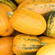 Stock Photo: Numerous natural pumpkins