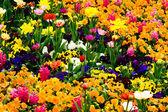 Giardino pieno di fiori — Foto Stock