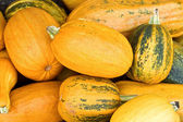Numerous natural pumpkins — Stock Photo