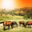 Wild horses on green field and sunny sky — Stock Photo #5228804