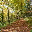 Forrest walkway in the autumn - Stock Photo