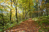 Forrest walkway in the autumn — Stock Photo