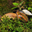 Stock Photo: Small snail astride big