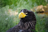 Head of an eagle — Stock Photo