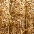 Wheat Haystacks closeup — Stock Photo
