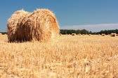 Wheat Haystacks after the harvest. — Stock Photo