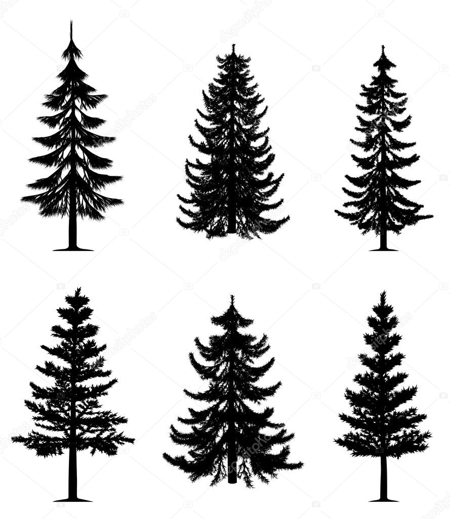 Collection of 6 pine trees on isolated white background. EPS file available. — Stock Vector #4227674