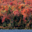 Autumn Algonquin Shore — Stock Photo