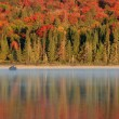 Stock Photo: Algonquin Reflections