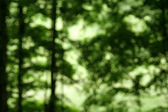 Defocused Forest — Stock Photo