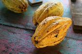 Ripe Cocoa Fruit — Stock Photo