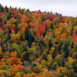 Stock Photo: Autumn Forest on Hill